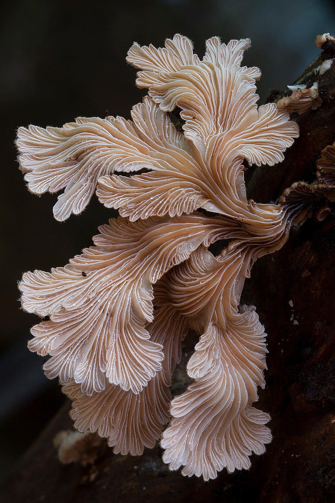 fungi_steve-axford