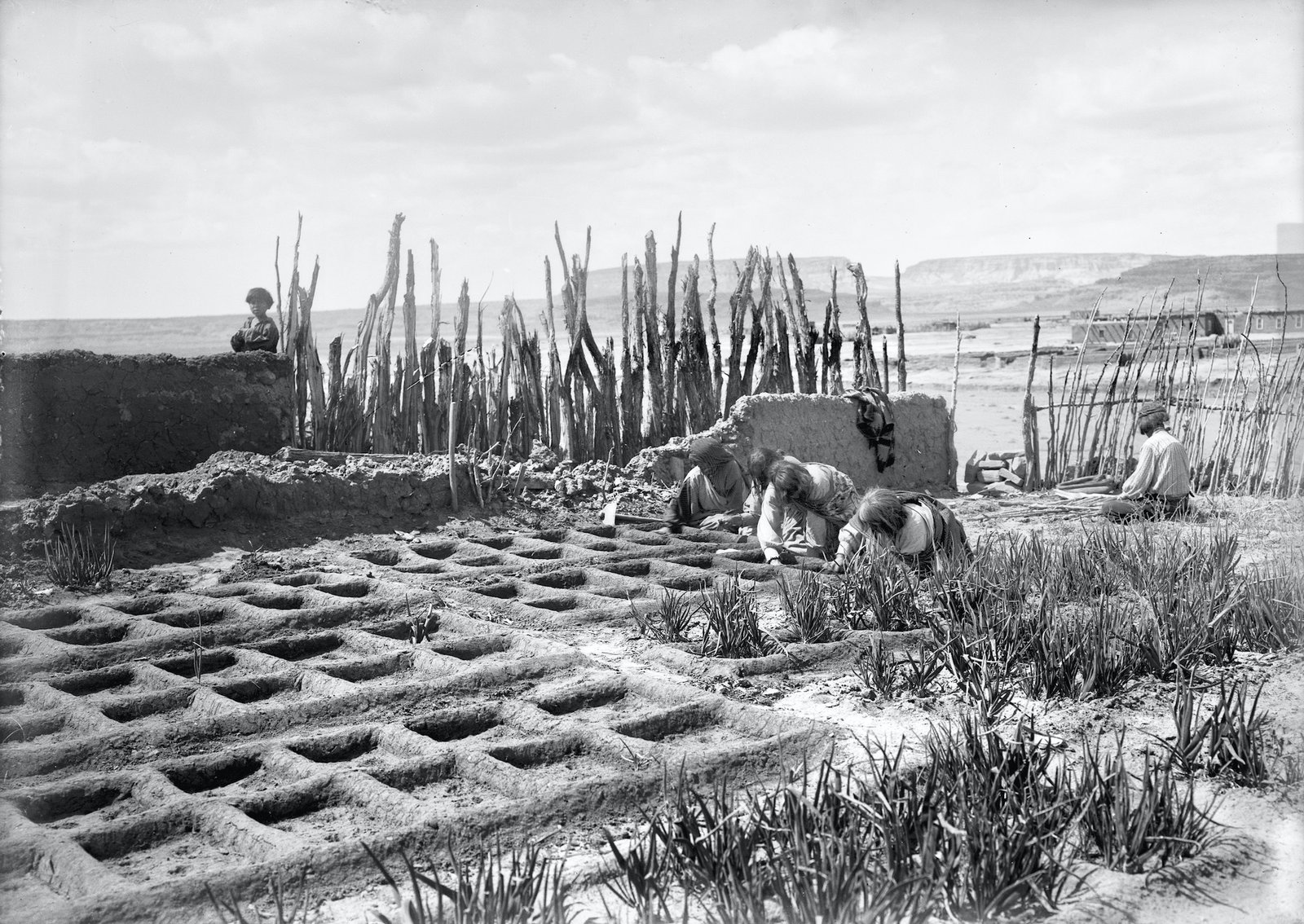 waffle-gardens-at-zuni-pueblo-in-new-mexico-circa-1910-1925